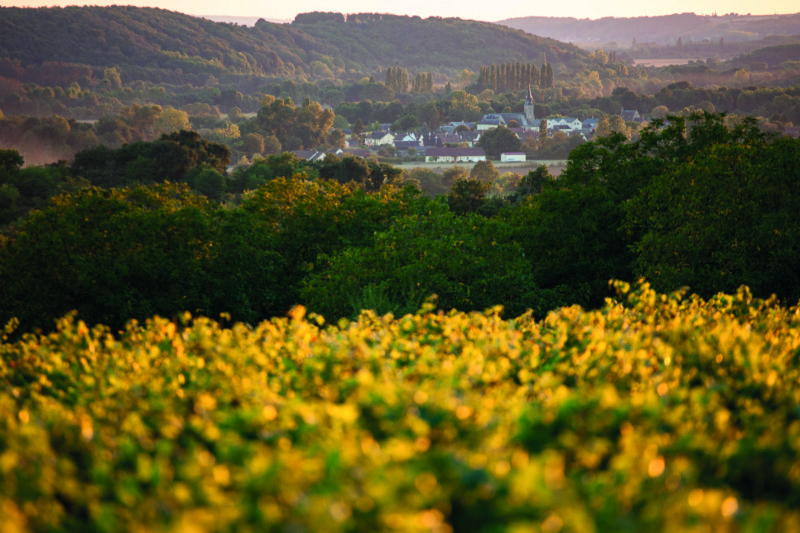 The Vallée du Loir is home to some of the finest wines in France.