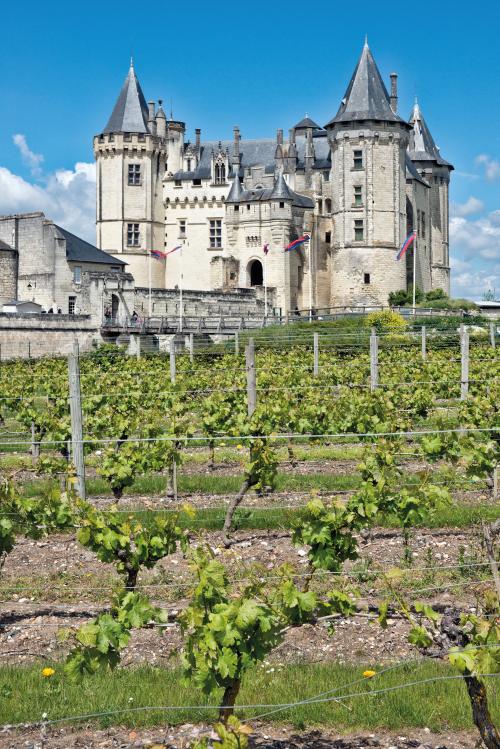 Vineyards abound in the Pays de la Loire.
