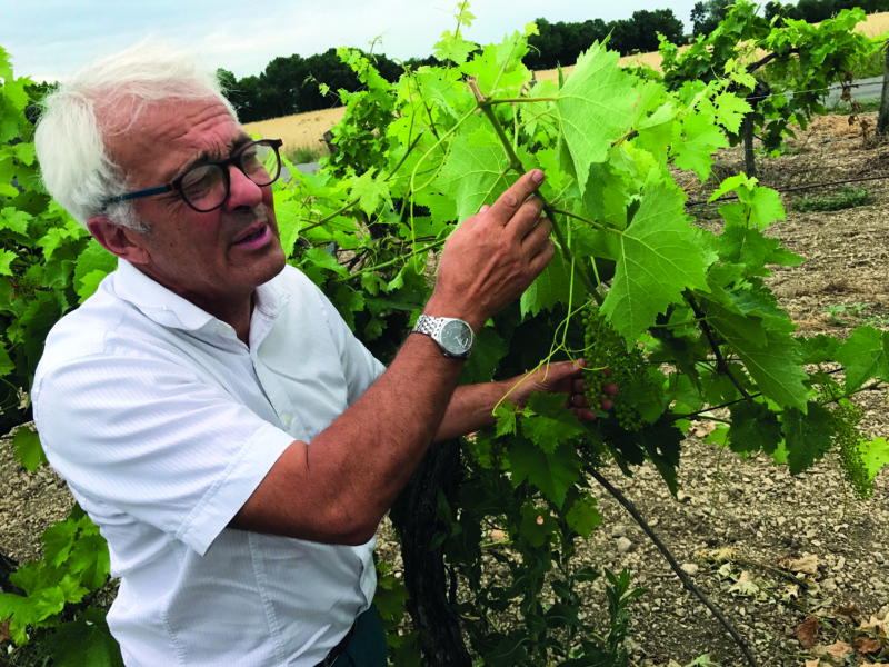 Organic cognac producer Jean-François Rault in the vineyard