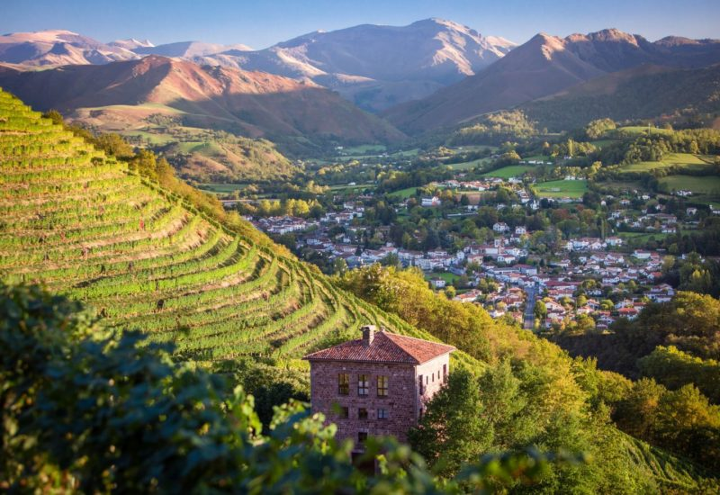 A vineyard located on the steep slopes facing the majestic Pyrénées Mountains