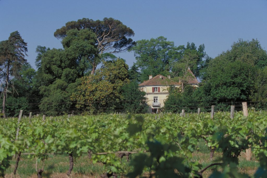 armagnac vineyard