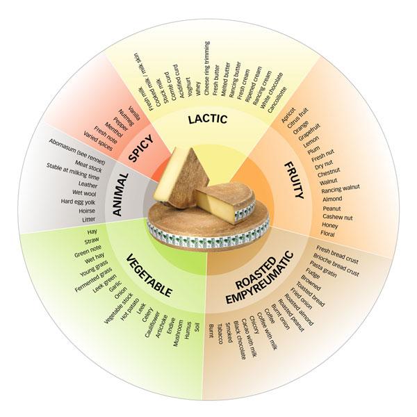 aromatic-wheel