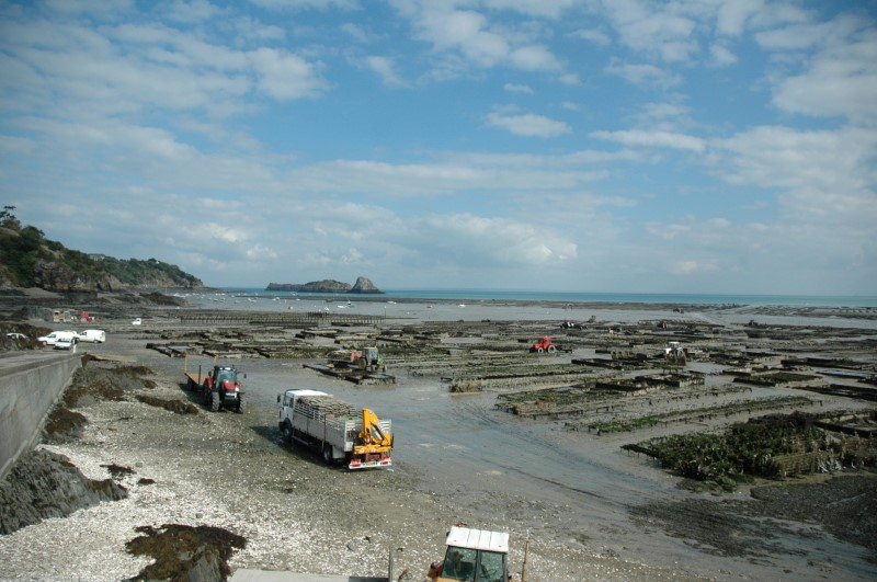 Cancale oysters are stirred by the tides of the Bay of Mont-Saint-Michel