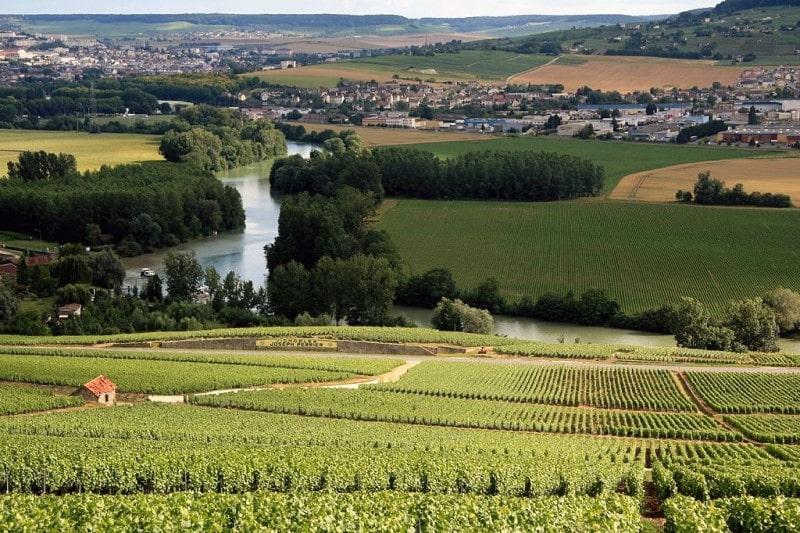 Champagne wine vineyards