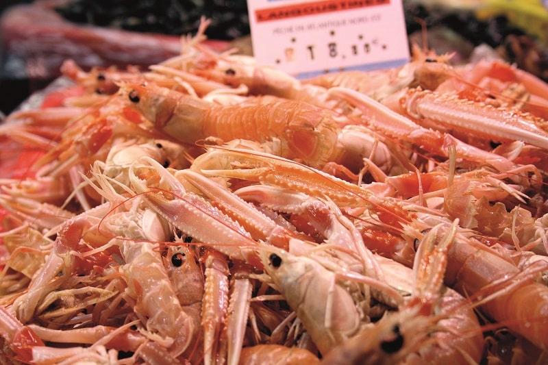 Brittany shrimp
