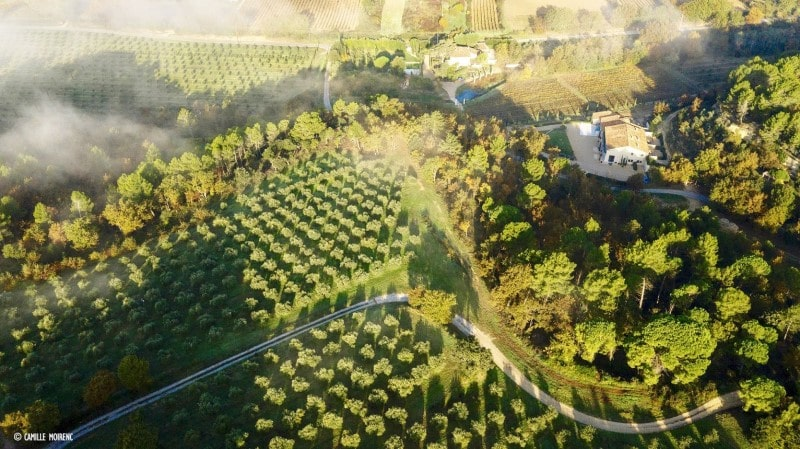 Olive oil vineyard