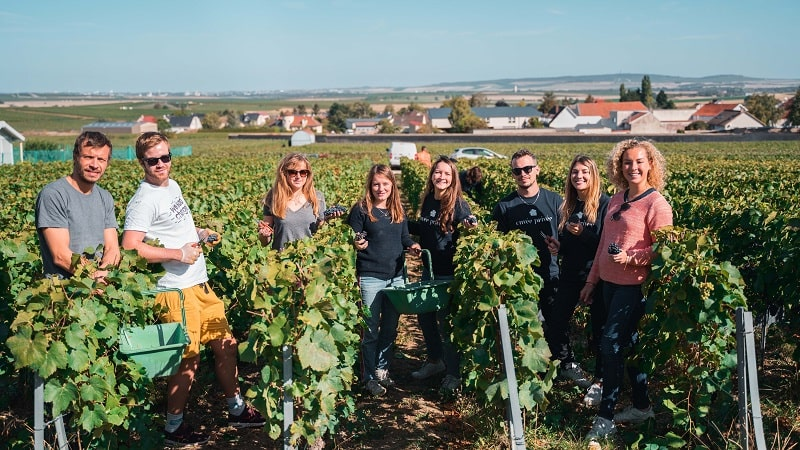 Harvest Day for the Cuvée Privée Team in 2019 at Champagne Forget-Chemin