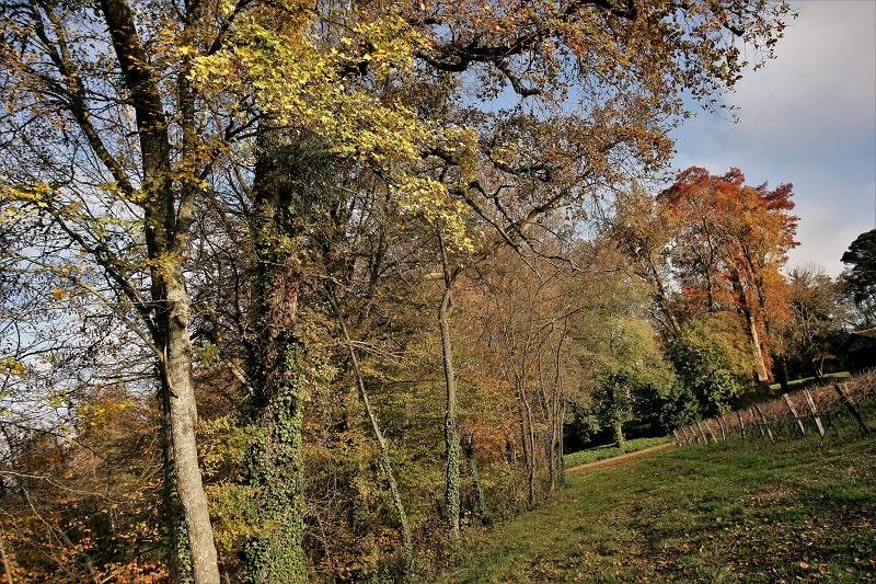 Bordeneuve autumn