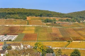 Climats of burgundy